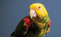 A parrot in the care of parrothelp.com