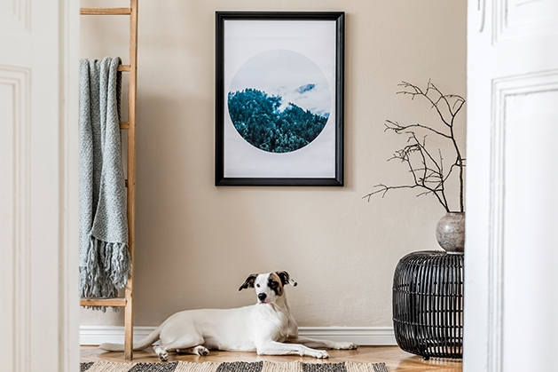 Tidy up, Organize home, Great Dane